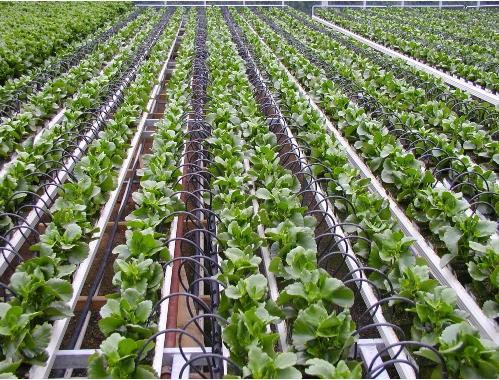 معرفی انواع لوله انتقال آب و کشاورزی